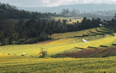 Is it Safe to Travel to Bali at the Moment? By Someone in Bali